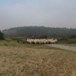 De activiteit 'Met de herder en de Kennemer Schaapskudde op pad (5+)' van Bezoekerscentrum De Kennemerduinen wordt u aangeboden door dekleineladder.nl uit Haarlem