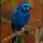 De activiteit 'De blauwe vogel schimmenspel' van De Vertelschuur wordt u aangeboden door dekleineladder.nl uit Haarlem