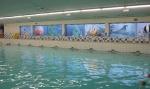 """Familiezwemmen bij SportPlaza Groenendaal Heemstede. Voor ouders en kinderen tot 12 jaar. <br>Doorzwemmen na 13.00 uur is toegestaan!<br>Tijdens de recreatieve tijden kan er ook gebruik gemaakt worden van de glijbaan van 40 meter. Je waant je in het """"Great Barrier Reef"""" met op gezette tijden echte golven. kinderen t/m 3 jaar € 2,40"""