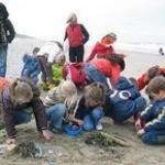 De activiteit 'Strandexcursie' van NP Zuid-Kennemerland | Parnassia wordt u aangeboden door dekleineladder.nl uit Haarlem