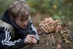 De activiteit 'Speurtocht naar paddenstoelen in Koningshof' van NP Zuid-Kennemerland | Koningshof wordt u aangeboden door dekleineladder.nl uit Haarlem