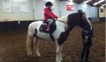 De activiteit 'Paardrijden' van Manege De Baarshoeve wordt u aangeboden door dekleineladder.nl uit Haarlem
