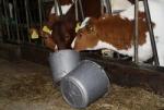 De activiteit 'De boerderij is open' van Informatieboerderij Zorgvrij wordt u aangeboden door dekleineladder.nl uit Haarlem