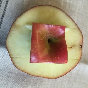 Haal voorzichtig de stukje appel weg en de basis ontstaat