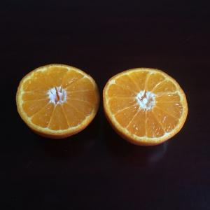 Snijd de mandarijn geheel door midden of maak voorzichtig een sneetje in de mandarijnen-schil